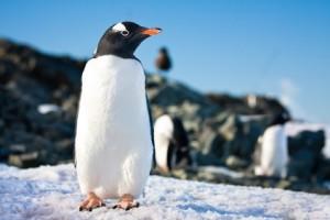 Penguin der repræsenterer Googles nye opdatering.